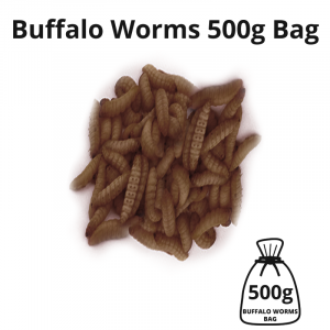 buffalo-worms-500g-bag