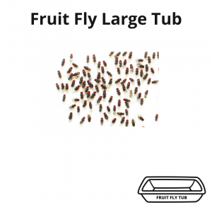 fruit-fly-tub