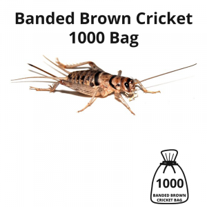 banded-brown-cricket-1000-bag-main-image