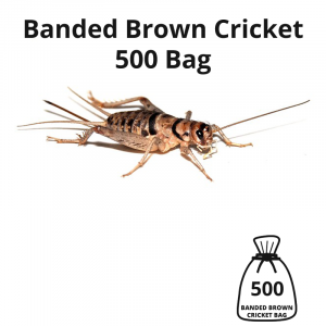banded-brown-cricket-500-bag-main-image