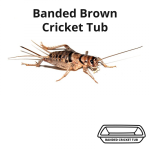 banded-brown-cricket-tub-main-image
