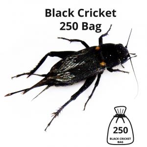 black-cricket-250-bag-main