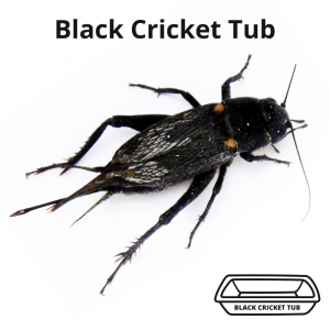 black-cricket-tub-main-image