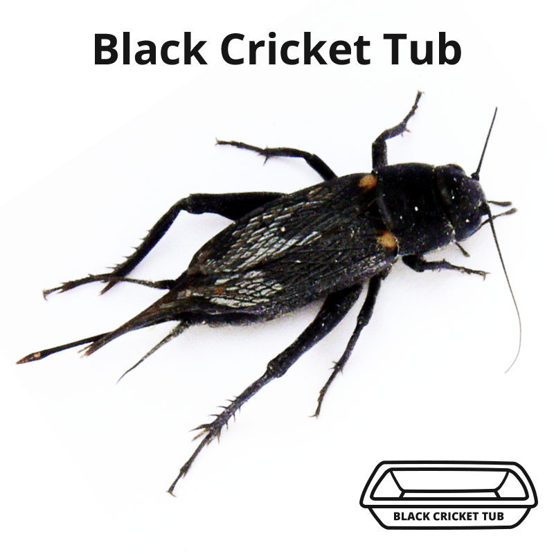 Black Cricket Tub