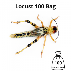 locust-100-bag-main-image