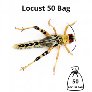 locust-50-bag-main-image