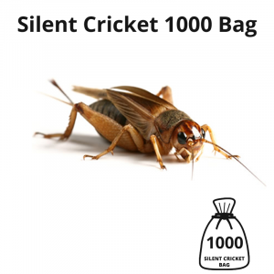 silent-cricket-1000-bag