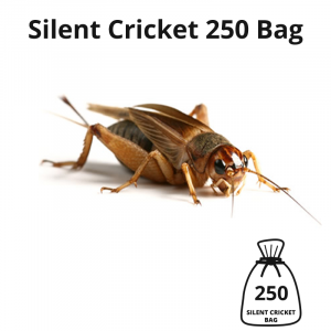 silent-cricket-250-bag