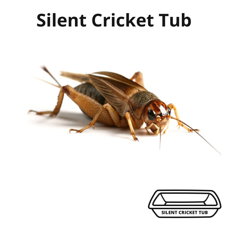 Silent Cricket Tub
